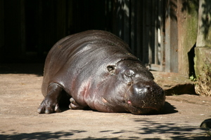 Relaxing Hippo